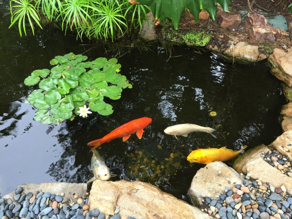 Koi pond at the Self-Realization Fellowship Meditation Gardens
