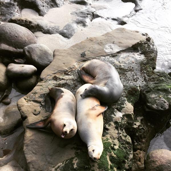 Seals at the La Jolla Children's Pool
